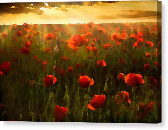 Red Poppies In The Sun Canvas Print