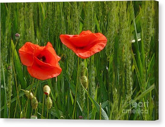 Red Poppy Flowers In Grassland 2 Canvas Print