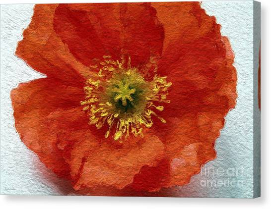 Big Red Canvas Print - Red Poppy by Linda Woods