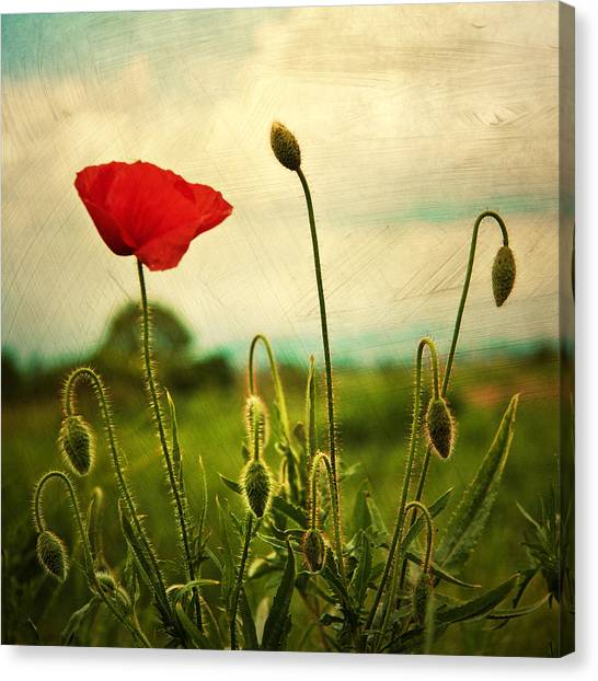 Red Poppy Canvas Prints | Fine Art America