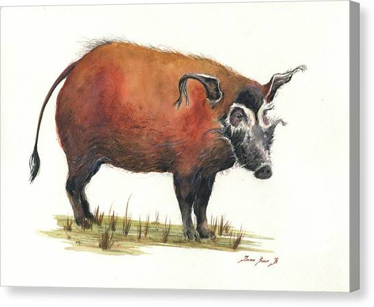 Hogs Canvas Print - Red River Hog by Juan Bosco