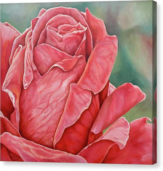 Red Rose 93 Canvas Print