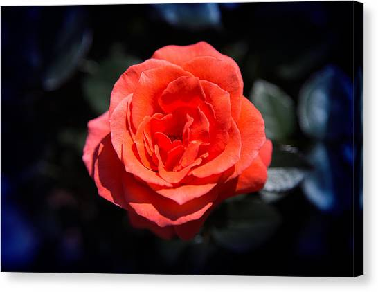 Red Rose Art Canvas Print
