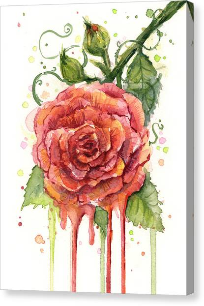 Flower Canvas Print - Red Rose Dripping Watercolor  by Olga Shvartsur