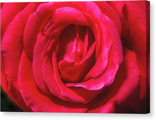 Canvas Print featuring the photograph Red Rose by John Brink