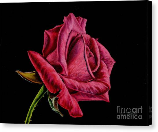 Red Roses Canvas Print - Red Rose On Black by Sarah Batalka