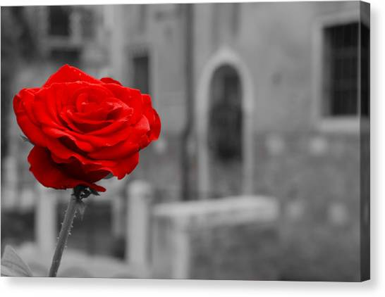 Red Rose With Black And White Background Canvas Print by Michael Henderson