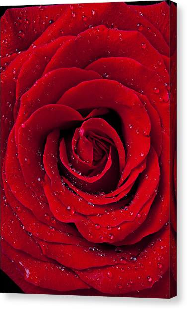 Wet Rose Canvas Print - Red Rose With Dew by Garry Gay