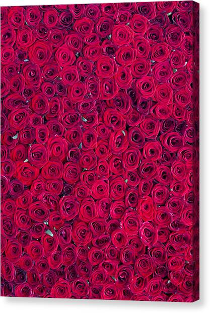 Red Roses Canvas Print - Red Roses by Vitor Costa
