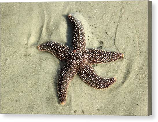 Red Sea Star Canvas Print