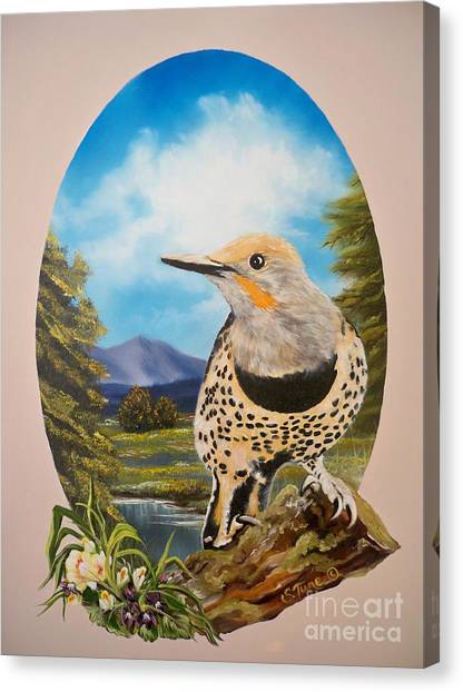 Flying Lamb Productions                       Red Shafted Flicker Canvas Print