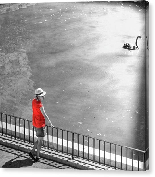 Amazing Canvas Print - Red Shirt, Black Swanla Seu, Palma De by John Edwards