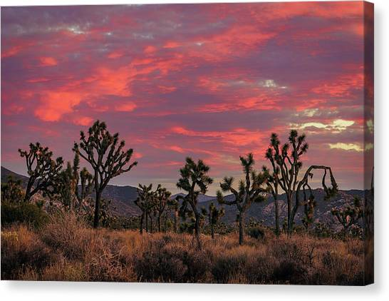 Red Sky Over Joshua Tree Canvas Print