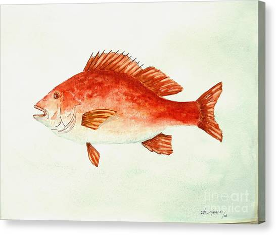 Red Snapper Canvas Print