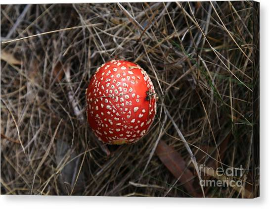 Red Spotty Toadstool Canvas Print