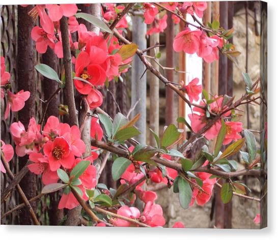 Red Spring Canvas Print by David Du Hempsey