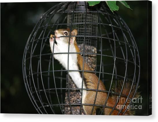 Red Squirrel Jail Canvas Print