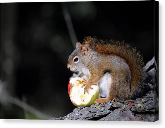 Red Squirrel Canvas Print by Steven Scott