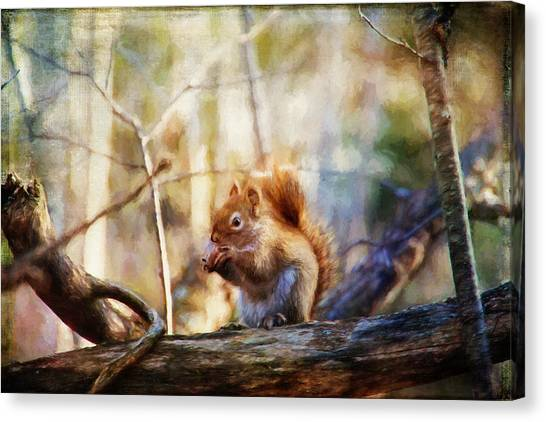 Red Squirrel With Pinecone Canvas Print
