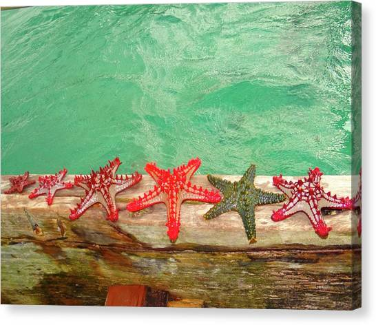 Exploramum Canvas Print - Red Starfish On A Wooden Dhow 1 by Exploramum Exploramum