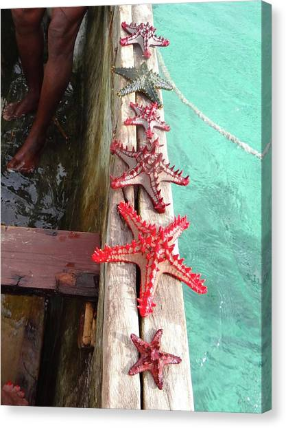 Exploramum Canvas Print - Red Starfish On A Wooden Dhow 4 by Exploramum Exploramum