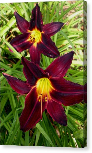 Red Stars Canvas Print by Jeanette Oberholtzer