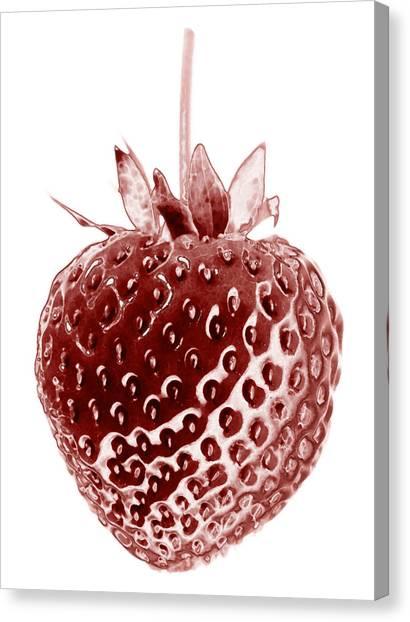 Red Strawberry Botanical Illustration Canvas Print by Frank Tschakert