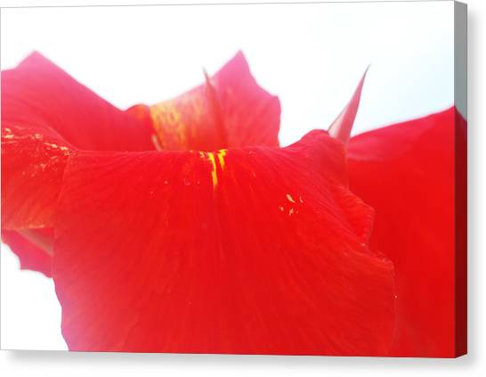 Red Canvas Print by Susette Lacsina