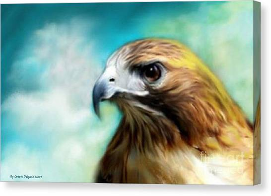 Red Tail Hawk  Canvas Print by Crispin  Delgado
