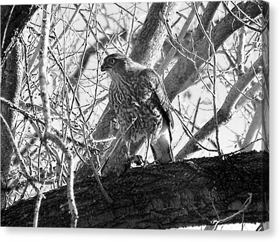 Canvas Print featuring the digital art Red Tail Hawk In Black And White by Deleas Kilgore