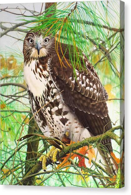England Artist Canvas Print - Red Tail Hawk, Thistle by Ken Everett