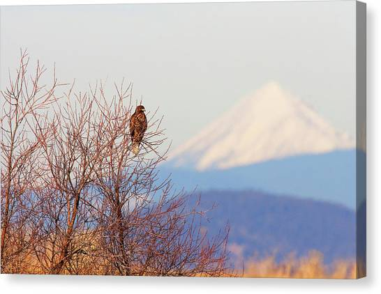 Red-tailed Hawk And Mount Shasta - Northern California Canvas Print