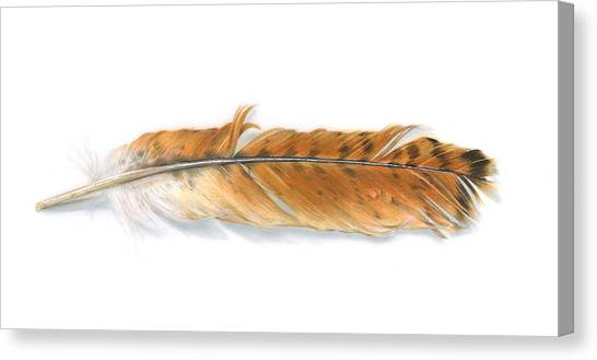 Canvas Print - Red-tailed Hawk Feather by Logan Parsons