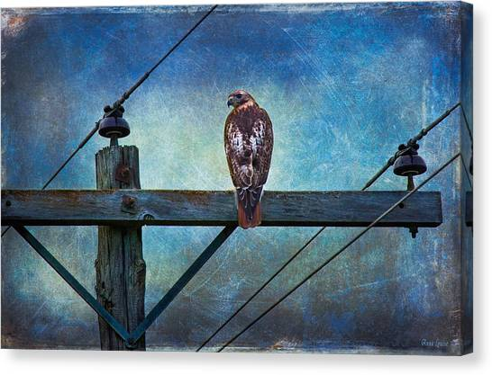 Red-tailed Hawk On Power Pole Canvas Print