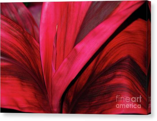 Canvas Print featuring the photograph Red Ti Leaf Plant - Hawaii by D Davila
