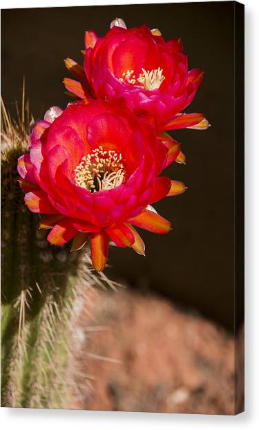 Red Tops Canvas Print