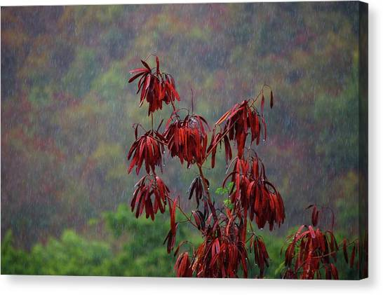 Red Tree In The Rain Canvas Print