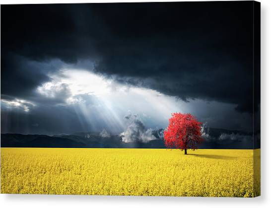Red Tree On Canola Meadow Canvas Print