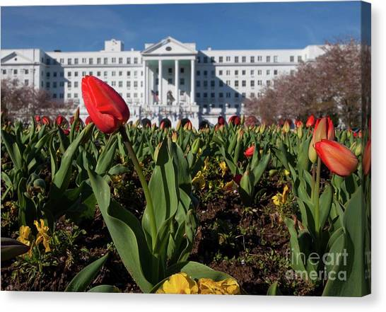 Red Tulip At The Greenbrier Canvas Print