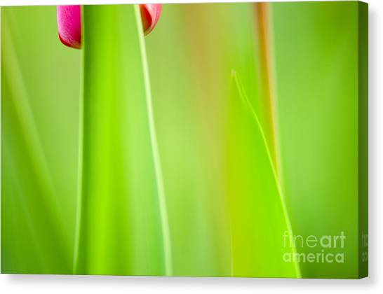 Flower Canvas Print - Red Tulip by Silke Magino