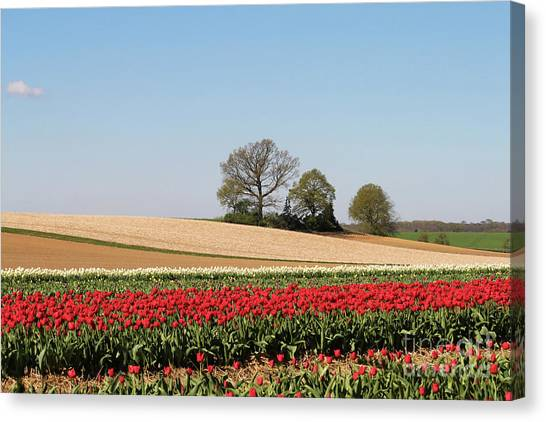 Red Tulips Landscape Canvas Print