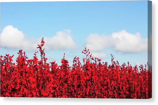 Red White And Blue Canvas Print by Barbara  White