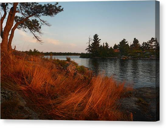Red Wild Grass Georgian Bay Canvas Print