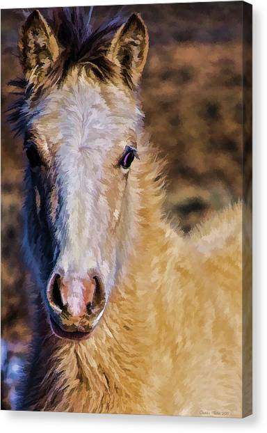 Red Willow Pony Canvas Print