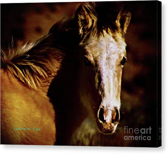 Red Willow Pony Lx Canvas Print