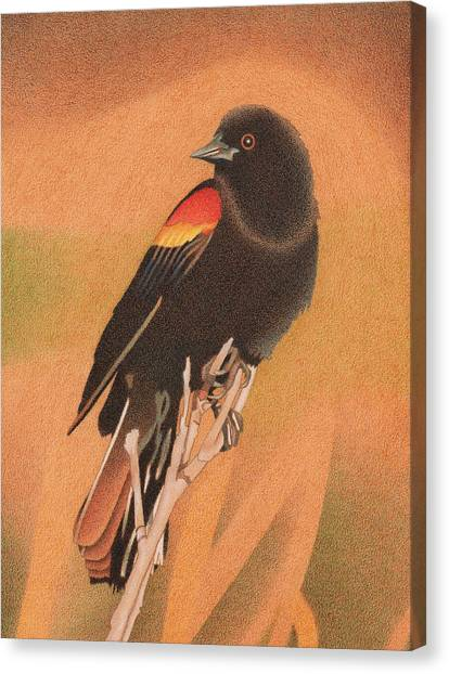 Red-winged Blackbird 3 Canvas Print