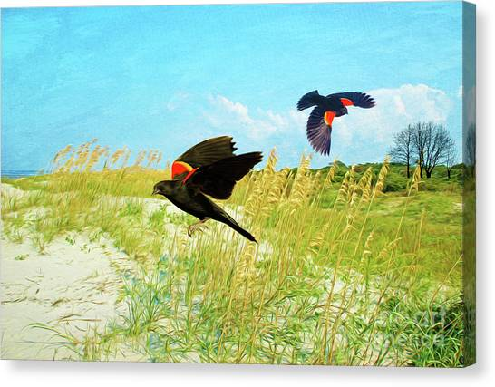 Blackbirds Canvas Print - Red-winged Blackbirds by Laura D Young
