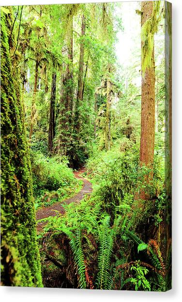 Red Woods Trail Canvas Print