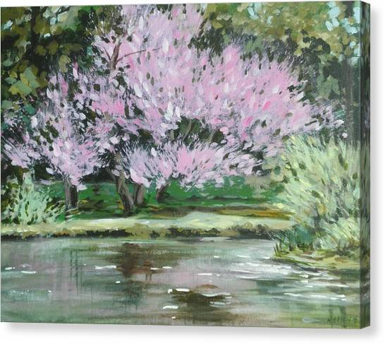 Redbud Reflections Canvas Print