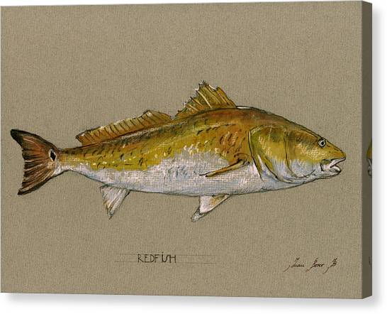 Fly Fishing Canvas Print - Redfish Painting  by Juan  Bosco